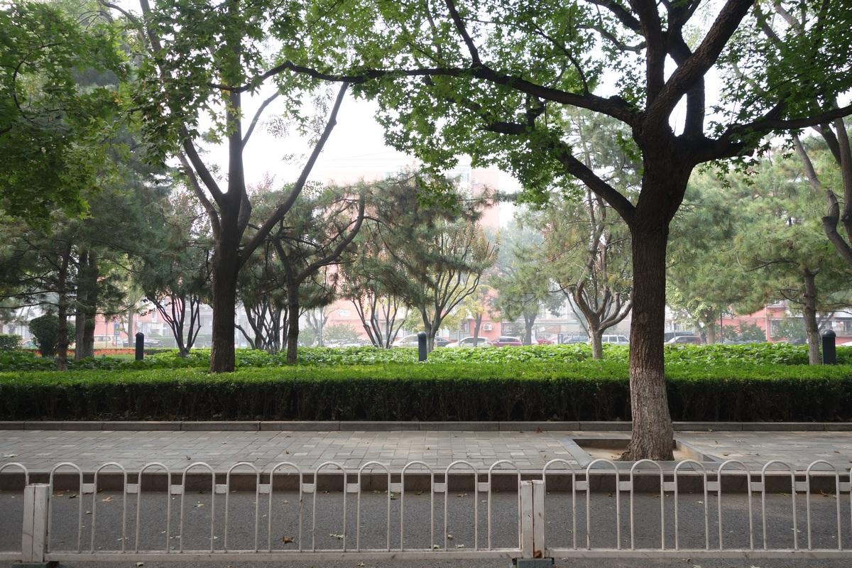 Ceci n'est pas un parc, mais une simple rue du centre