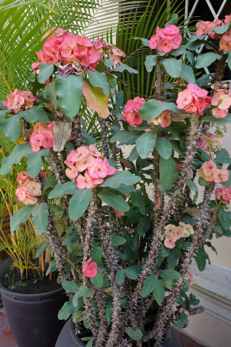 Si quelqu'un connaît le nom de cette plante très paradoxale, nous sommes preneurs