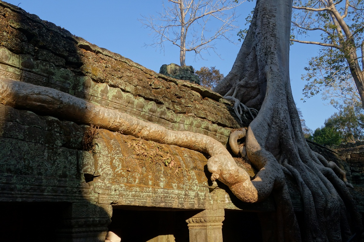 "Tapez ""tomb raider ta prohm"" dans Google"