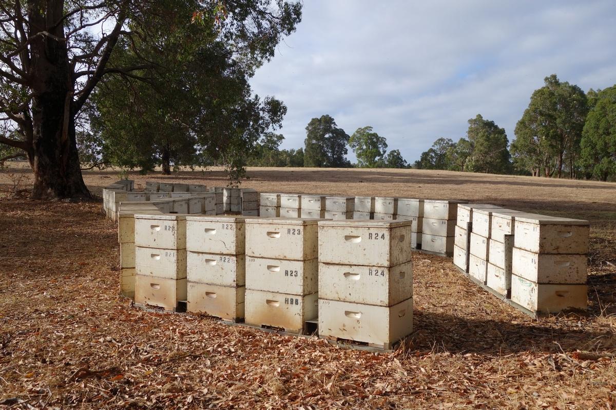 3 étages : 1 pour le couvain (en bas) et 2 hausses pour le miel