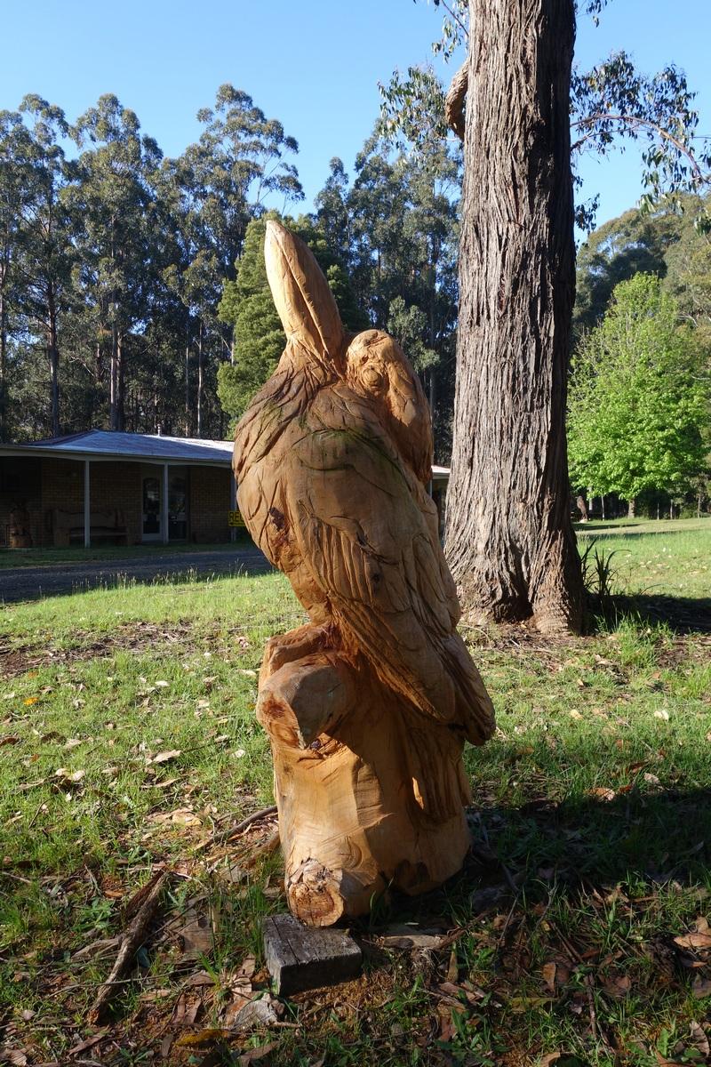 Un fier kookaburra